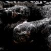 02.moonlake_earth_stanev_films