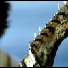 06.moonlake_orpheus_stanev_films